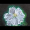 Fleur d'amandier
